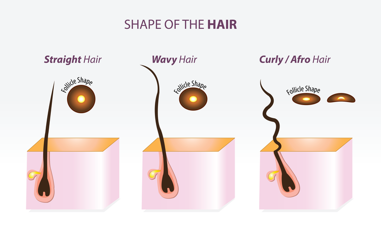Knowing Your Hair 101 Disulfide Bonds And Follicle Shape
